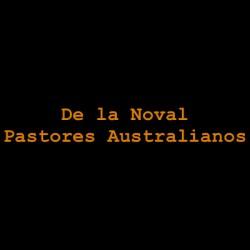 De la Noval - Pastores Australianos