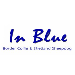 IN BLUE Border Collie & Shetland Sheepdog