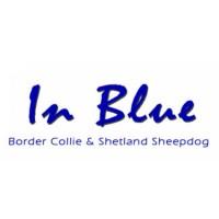 IN BLUE Border Collie & Shetland Sheepdog
