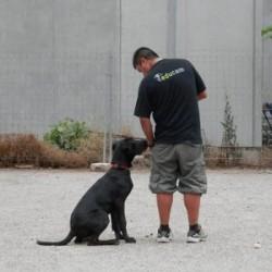 Educam - Peluqueria y adiestrador canino
