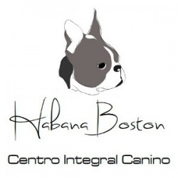 Habana Boston. Centro Integral Canino