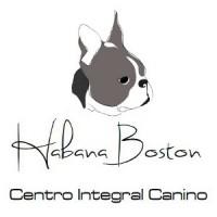 Habana Boston