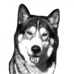 Alaskan - Peluquería Canina y Felina