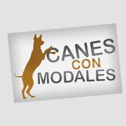 Canes con Modales - Adiestrador y paseador canino