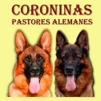 Coroninas - Pastores Alemanes