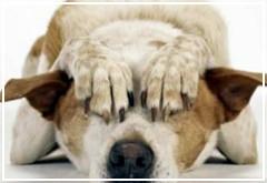 A mi perro le dan miedo los petardos ¿Qué puedo hacer?