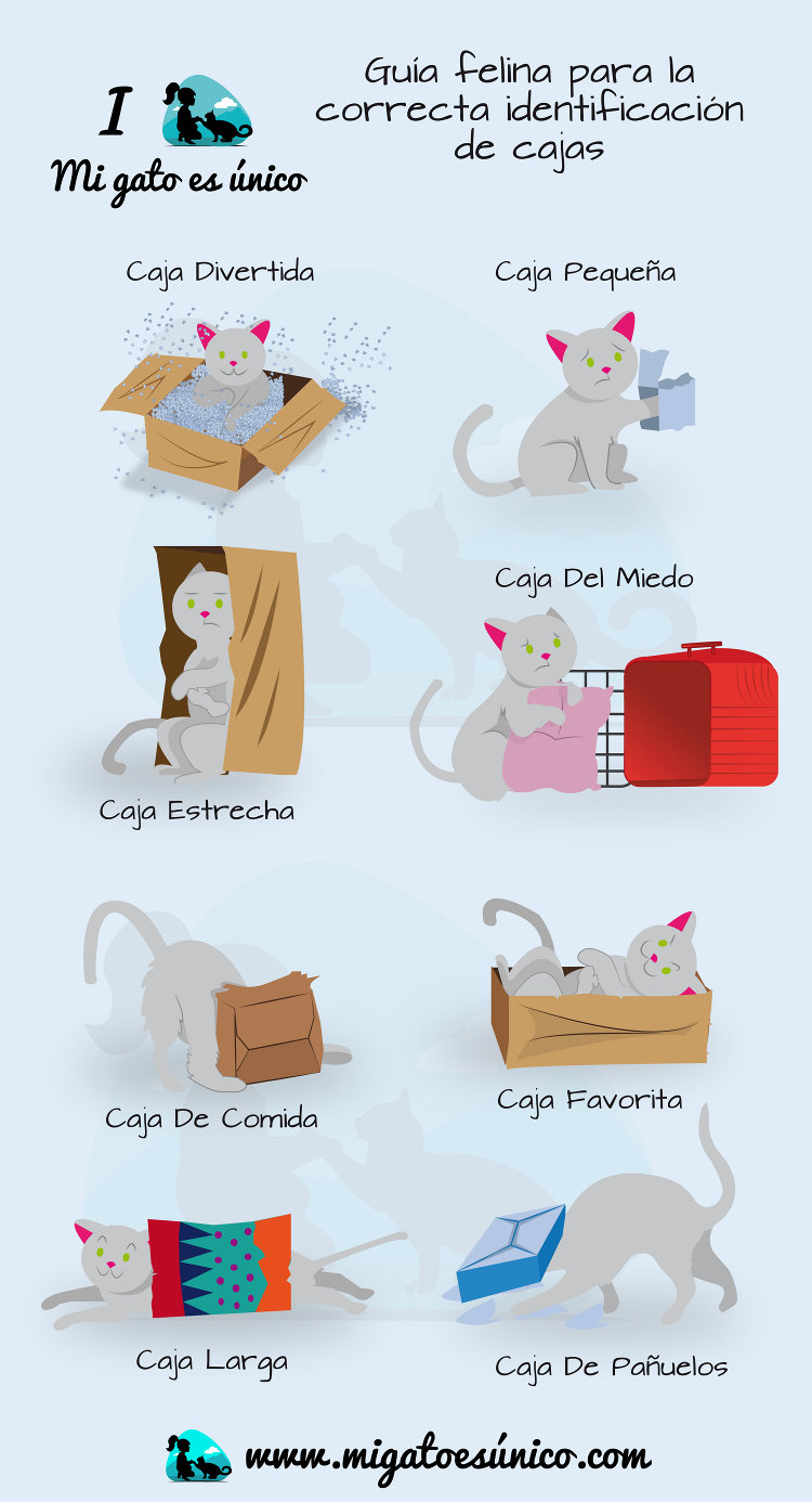 Guía felina para la correcta identificación de cajas