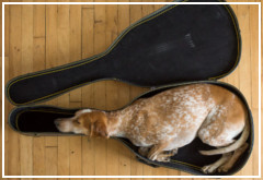 Maddie, es uno de los perros más famosos de internet
