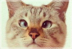 Tomiinya ya es una Mascotagram