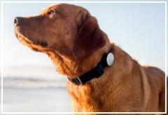 Ventajas y desventajas al castrar a un perro