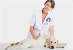 Ventajas y desventajas de esterilizar a una perra