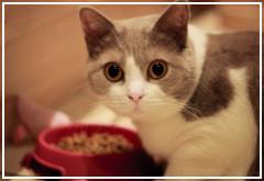 La alimentación del gato