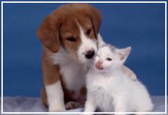 ¿Se quieren los perros y los gatos?