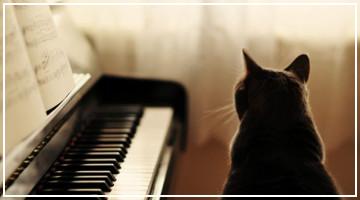 Artículo Destacado - ¿Los gatos reaccionan positivamente a la música?