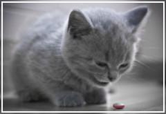 ¿A mi gato puedo darle Aspirina?