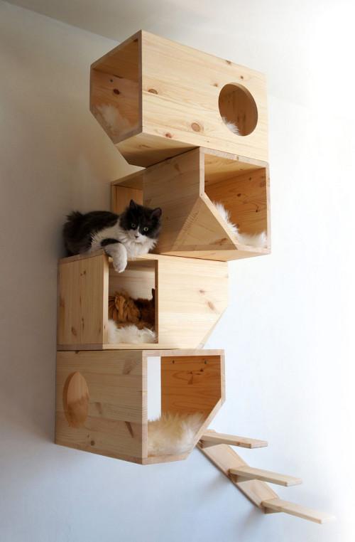 Tu gato en el interior o en el exterior en invierno mi - Casas para gatos baratas ...