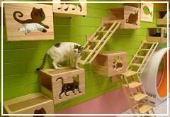 Consejos para gatos p gina 2 mi perro es nico - Casa gatos exterior ...