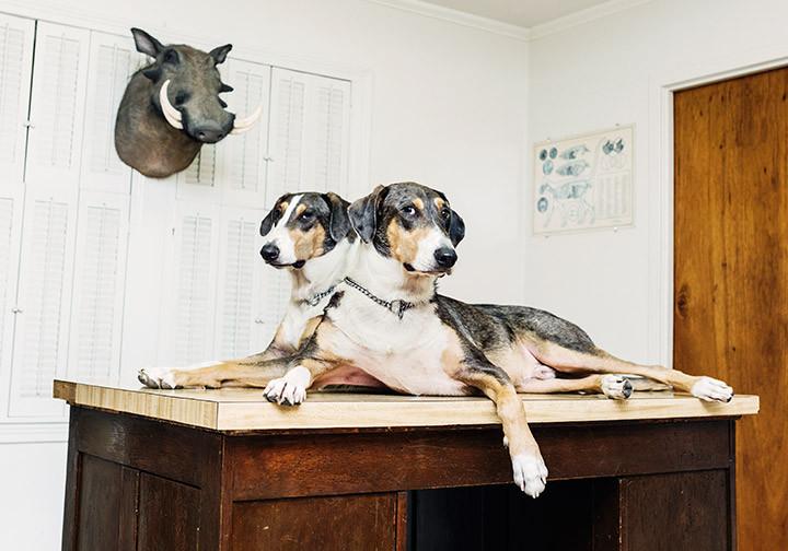 Bussinessweek - Perro clonado