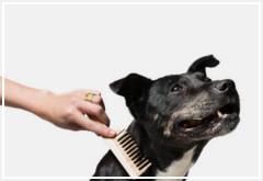 Como cepillar el pelaje a un perro