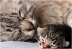 ¿Qué cuidados necesita una gata embarazada?