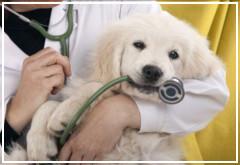 Instrucciones para tratar la Giardia en perros