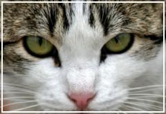 Mi gato siempre tiene los ojos sucios ¿Puede ser conjuntivitis?