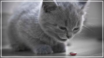 Consejo destacado - ¿A mi gato puedo darle Aspirina?