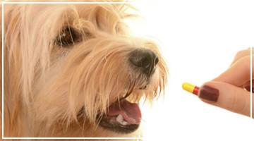 Consejo destacado - ¿A mi perro puedo darle Aspirina?