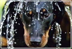 Consejos veraniegos para cuidar a tu perro