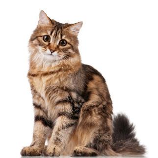 Artículos sobre gatos