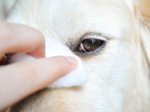 Los cuidados básicos del perro - Ojos