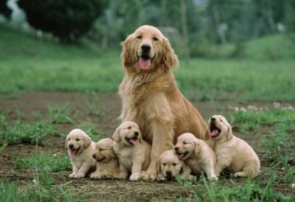 ¿Qué cuidados necesita una perra embarazada?