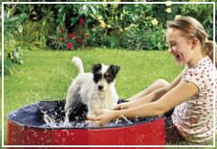 Piscina para perros, refresca a tu perro
