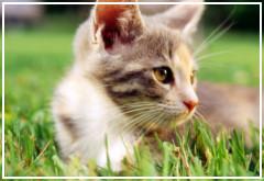 Diferencias entre gatos de ciudad y gatos de campo