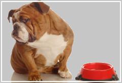 Educa a tu perro en una alimentación saludable