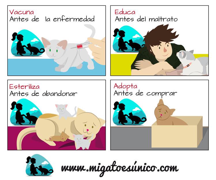Educación para gatos