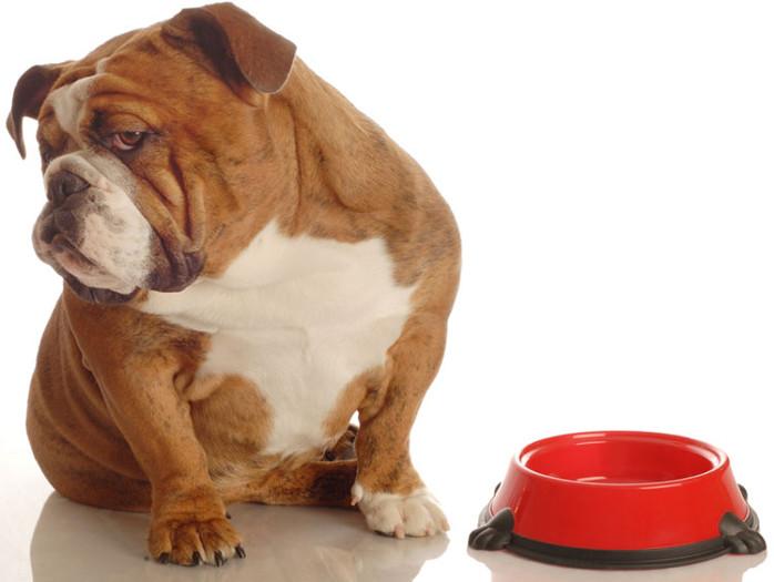 Cómo educar a tu perro en una alimentación saludable