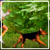 Tu perro te alienta a hacer ejercicio
