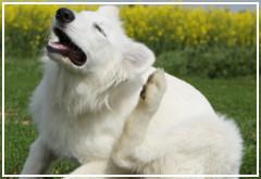5 enfermedades comunes en los perros