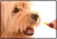 ¿A mi perro puedo darle Aspirina?