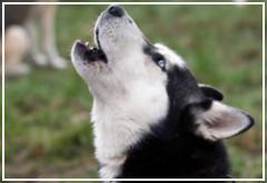 ¿Qué puedo hacer para que mi perro deje de ladrar?
