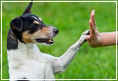 Factores positivos del adiestramiento en perros