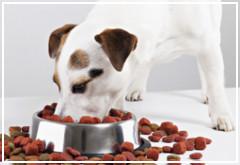 Factores que modifican la forma de alimentarse de tu perro