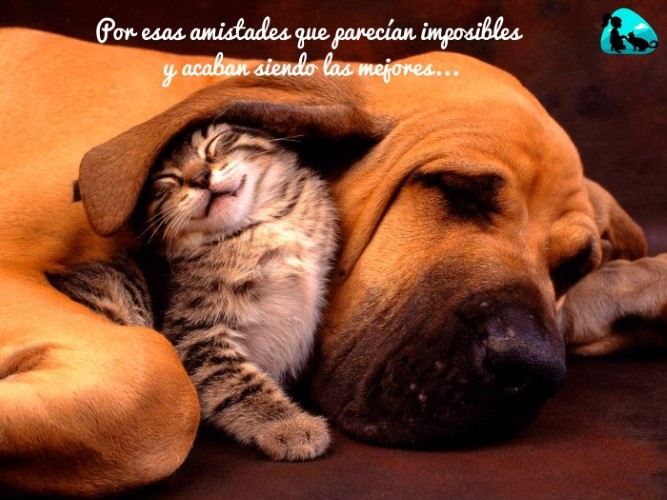 Por esas amistades que parecían imposibles y acaban siendo las mejores...