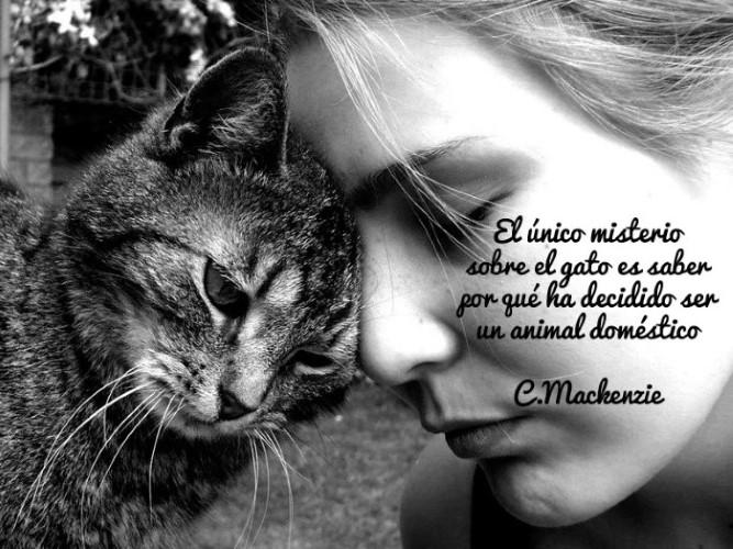 El único misterio sobre el gato es saber por qué ha decidido ser un animal doméstico. C. Machenzie