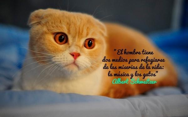 gatos bonitos related keywords - photo #33