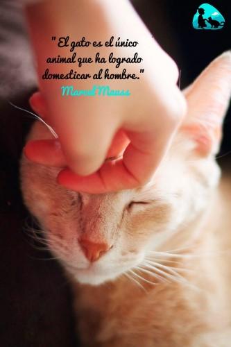 El gato es el único animal que ha logrado domesticar al hombre.