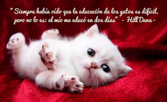 Siempre había oído que la educación de los gatos es difícil, pero no lo es: el mío me educó en dos días. Hill Dana