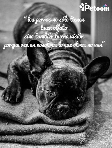 Los perros no sólo tienen buen olfato sino también buena visión porque ven en nosotros lo que otros no ven.