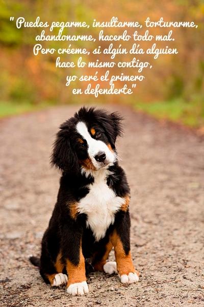 Citas Sobre Perros Página 6 Mi Perro Es único